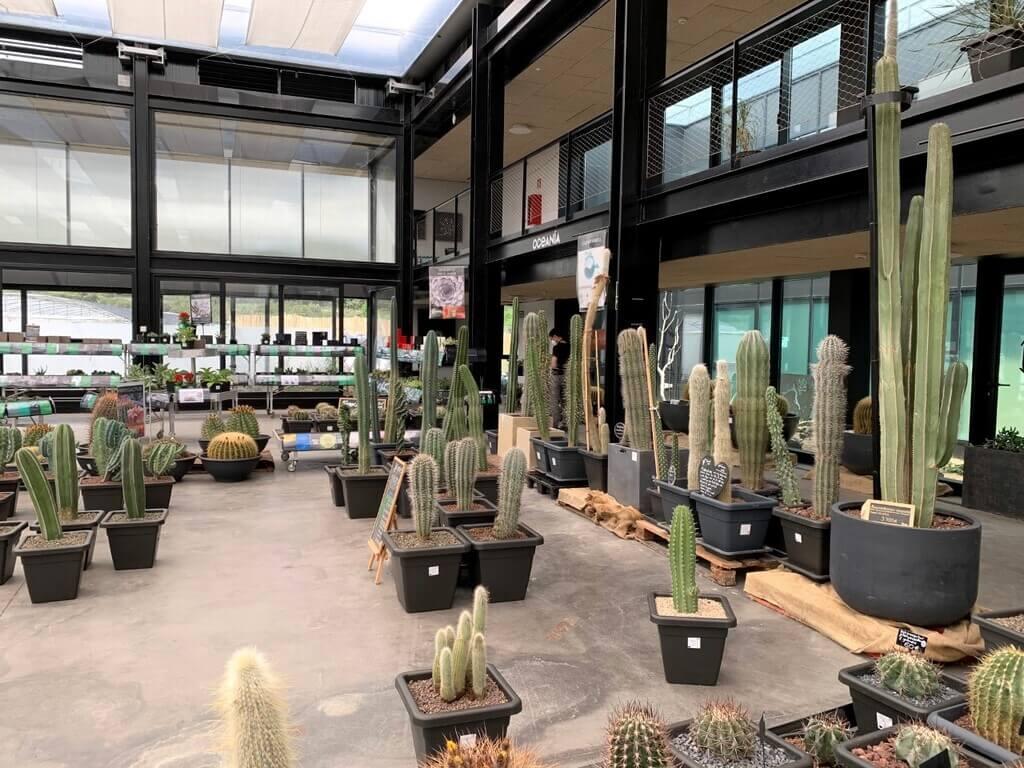 Cactus del vivero - tienda