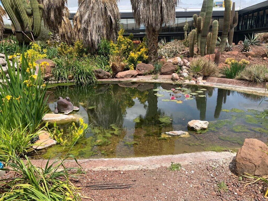 Uno de los estanques de Oasis