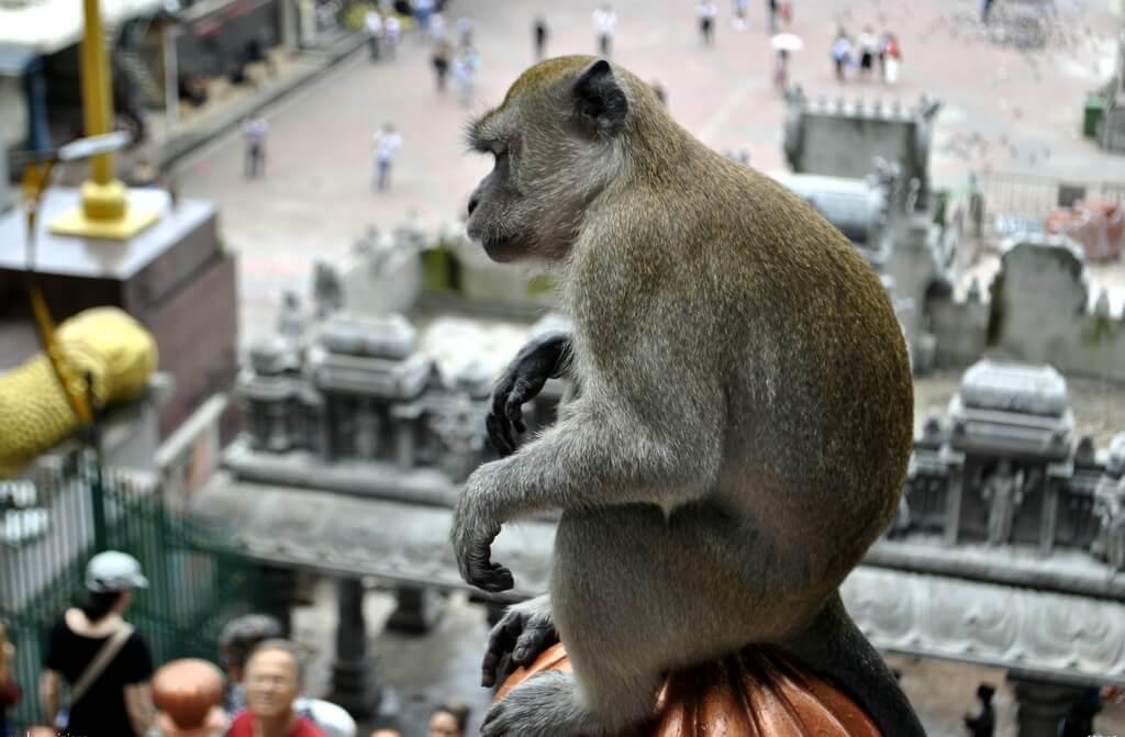 Macaco en las Batu Caves