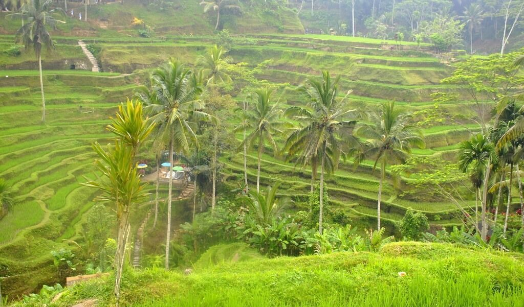 arrozales de Tegalalang