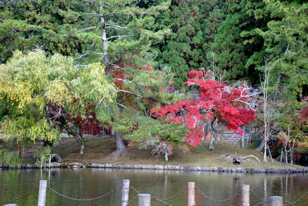 Estanque en el Parque de Nara