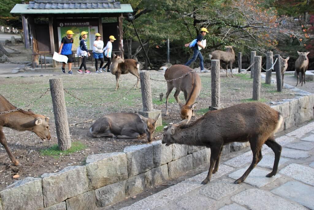 Los ciervos campan a sus anchas por todo Nara-Koen