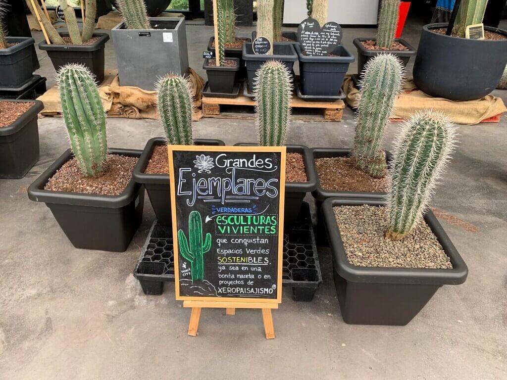 Los cactus son los reyes de Desert City