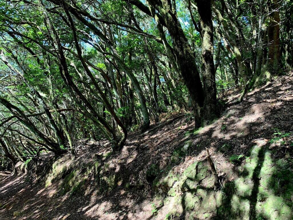 Bosque de laurisilva de Anaga