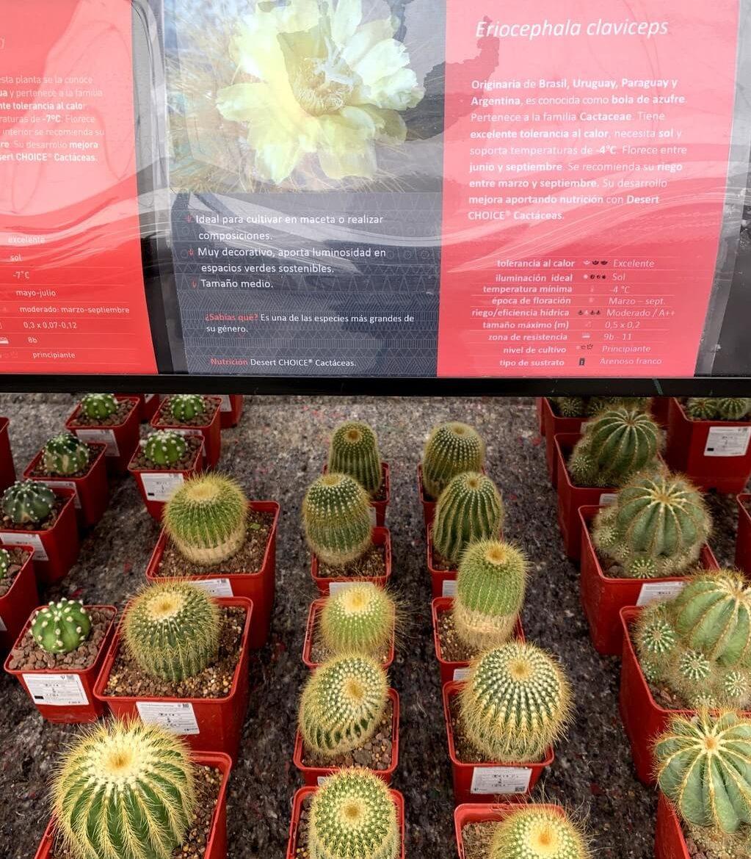 Diferentes tipos de cactus y sus características