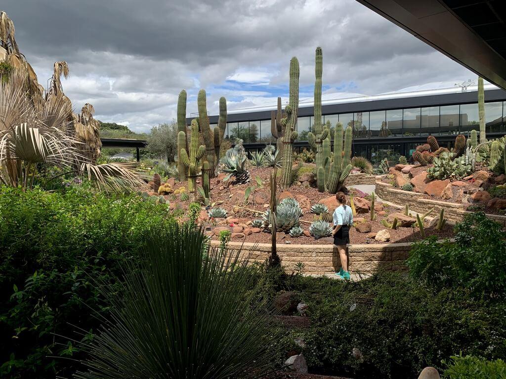 Paseando por el jardín de Desert City