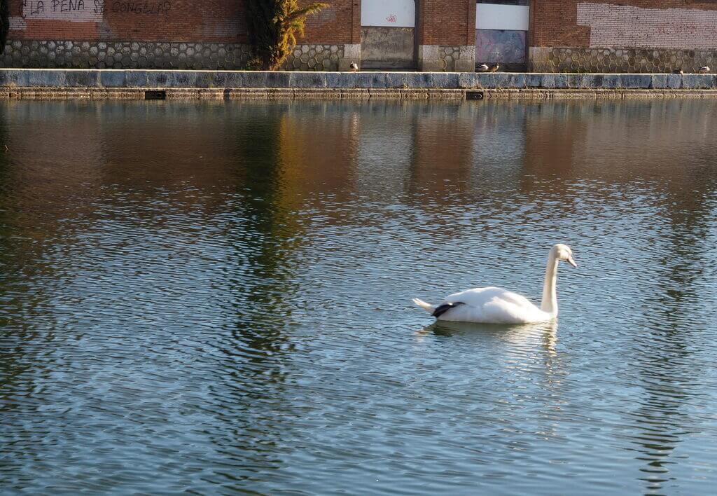 Dársena del Canal