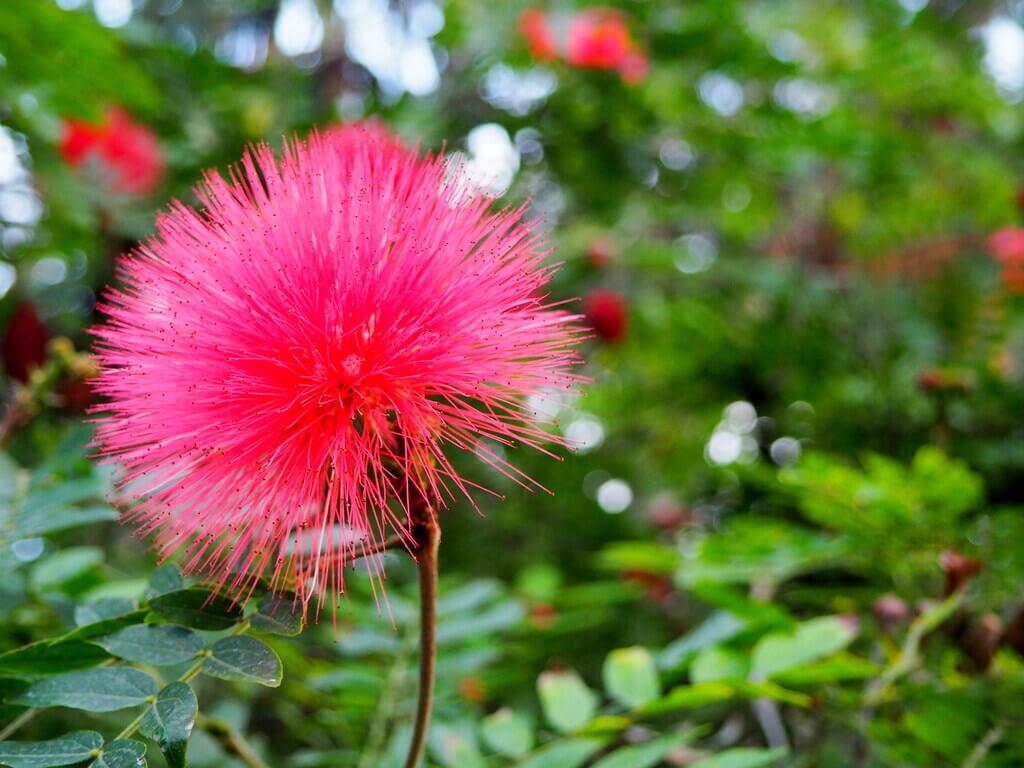 El jardín cuenta con numerosas flores exóticas