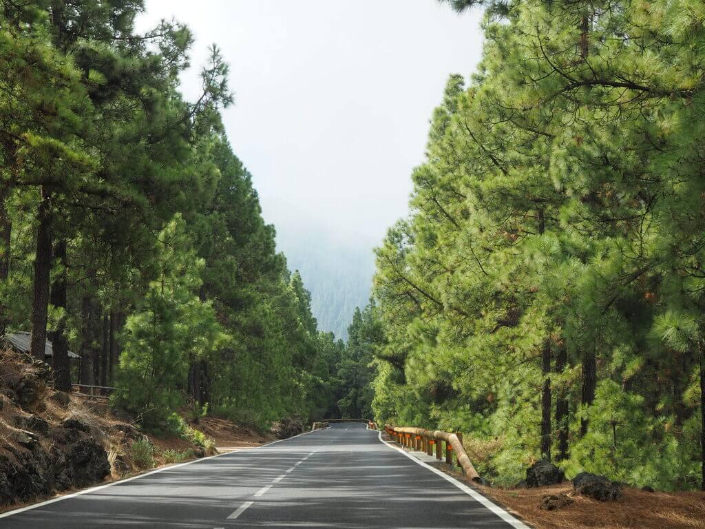 Camino del Parque Nacional de Teide