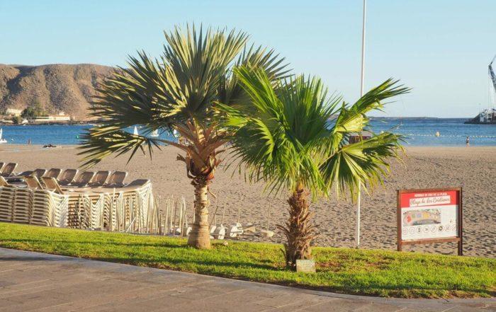 cuáles son Las mejores playas de Tenerife