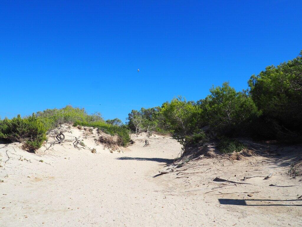 Es trenc y sus dunas
