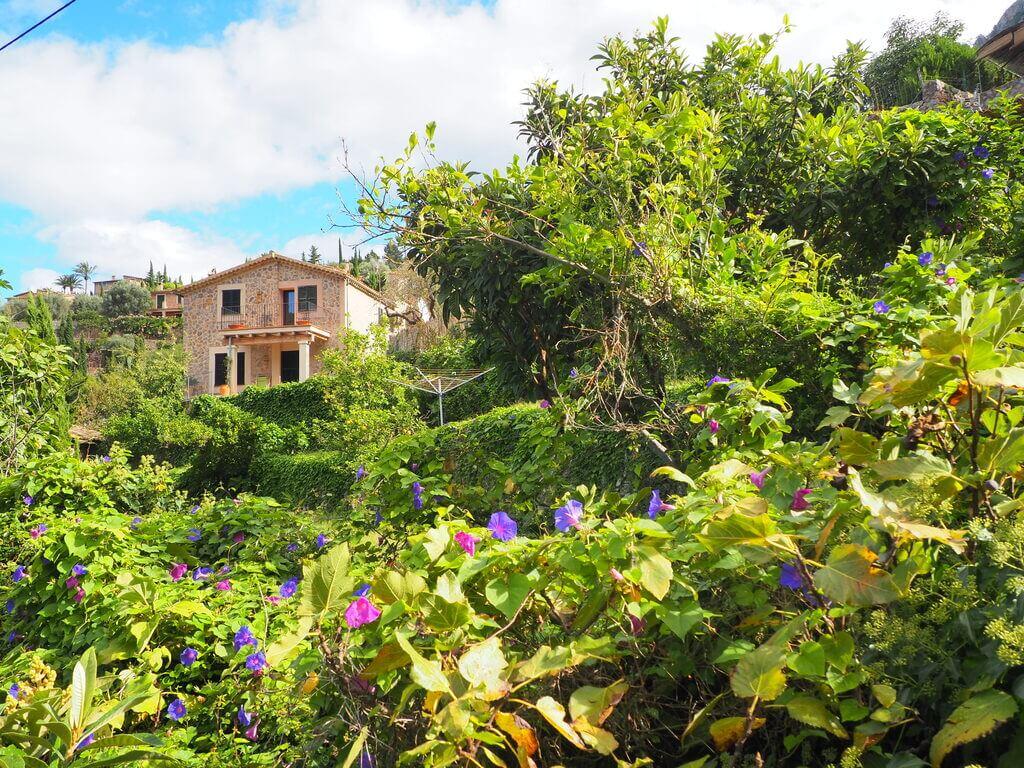 Naturaleza exuberante en Camino es Racó