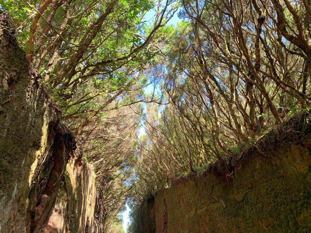 Pared de laurisilva en el Parque rural de Anaga